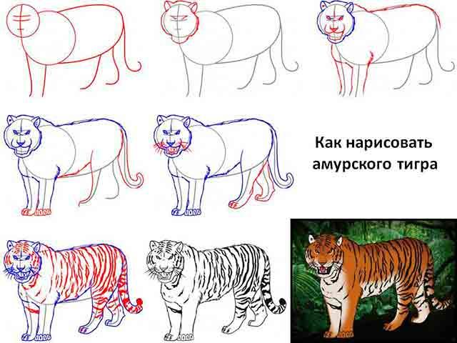 тигр поэтапно